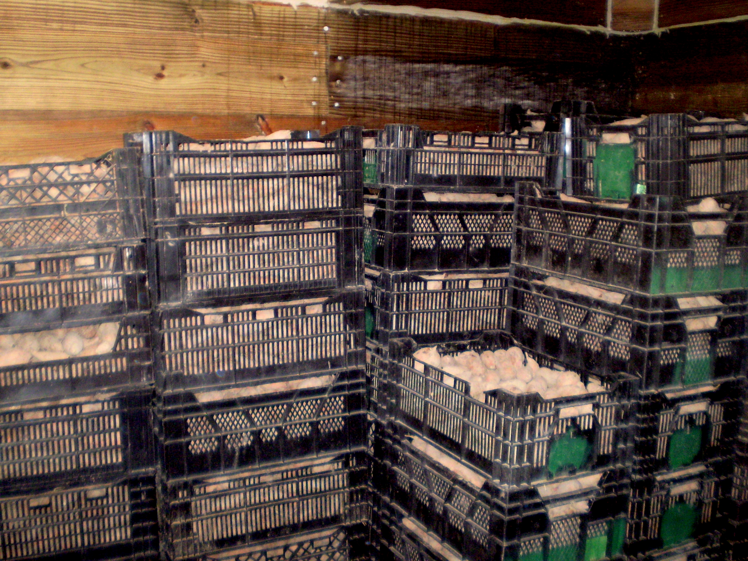 how to build a fruit cellar