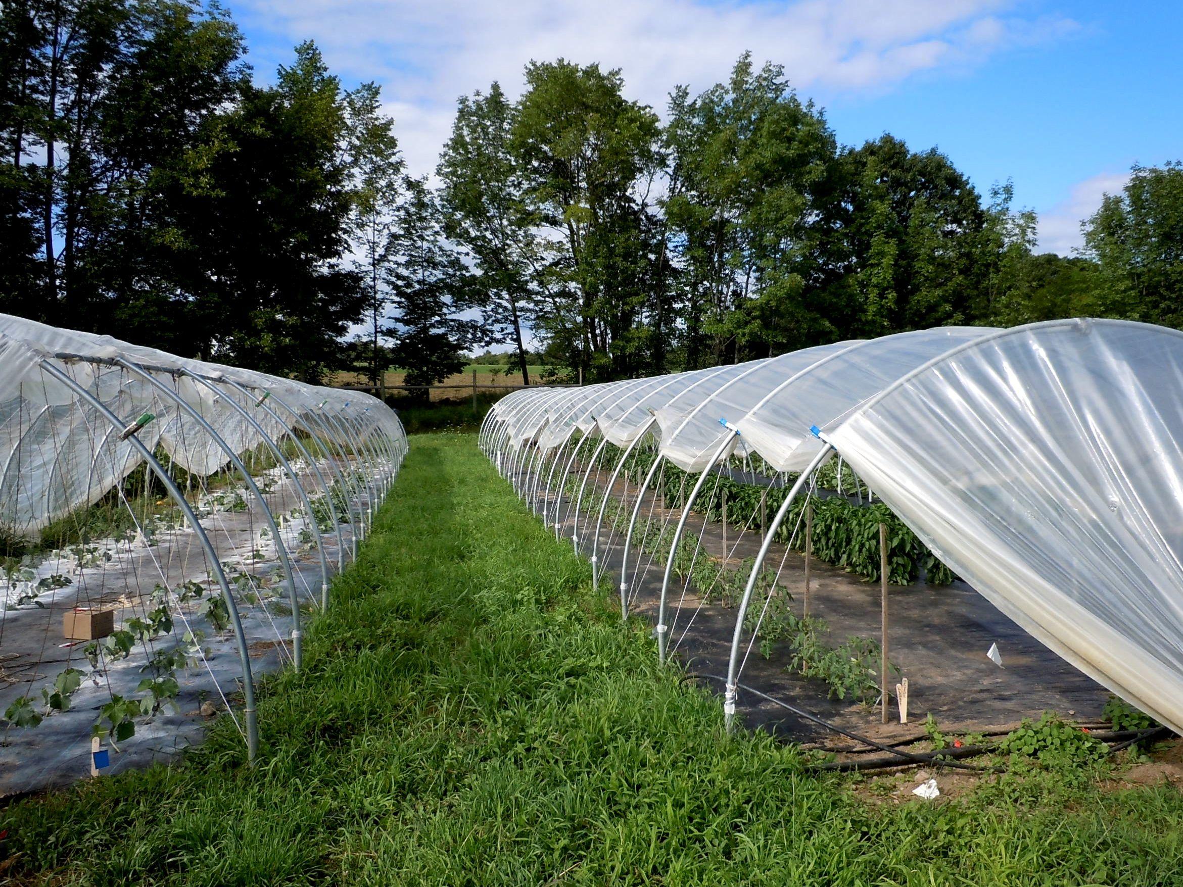 Research Farm Little House On The Urban Prairie